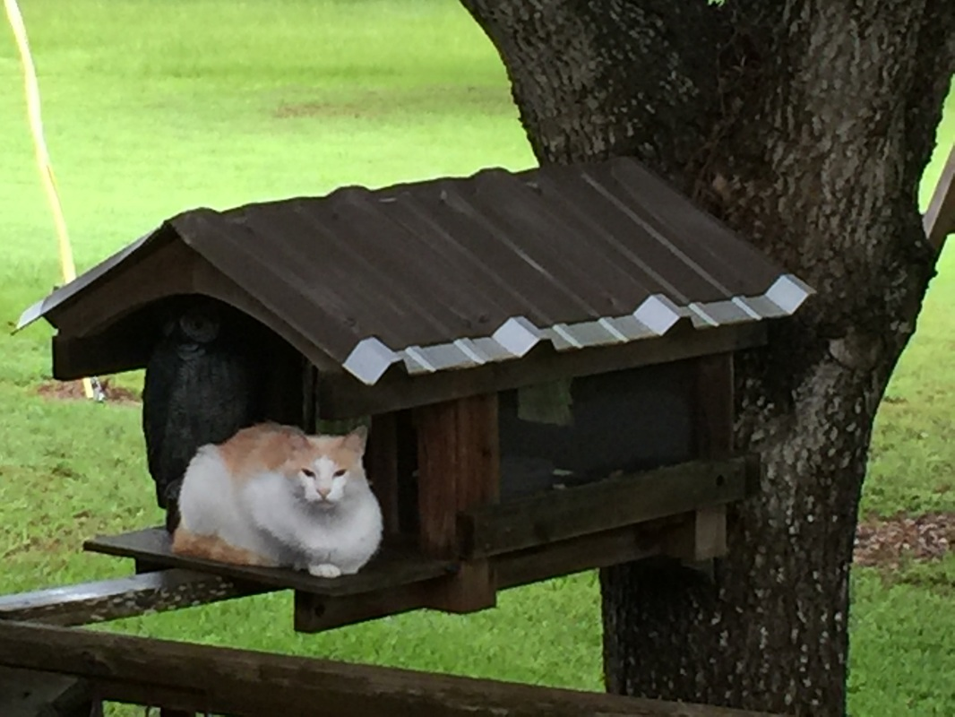 George the Cat in Front of His Custom Cat House